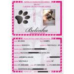 RG_animal_caes_cao_gato_cachorros_calopsitas_passaros_ratos_identidade_identificacao_placas_identidade+plaquetas_micro_chip_microchip_documento_RGA_07