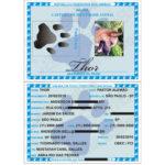 RG_animal_caes_cao_gato_cachorros_calopsitas_passaros_ratos_identidade_identificacao_placas_identidade+plaquetas_micro_chip_microchip_documento_RGA_10
